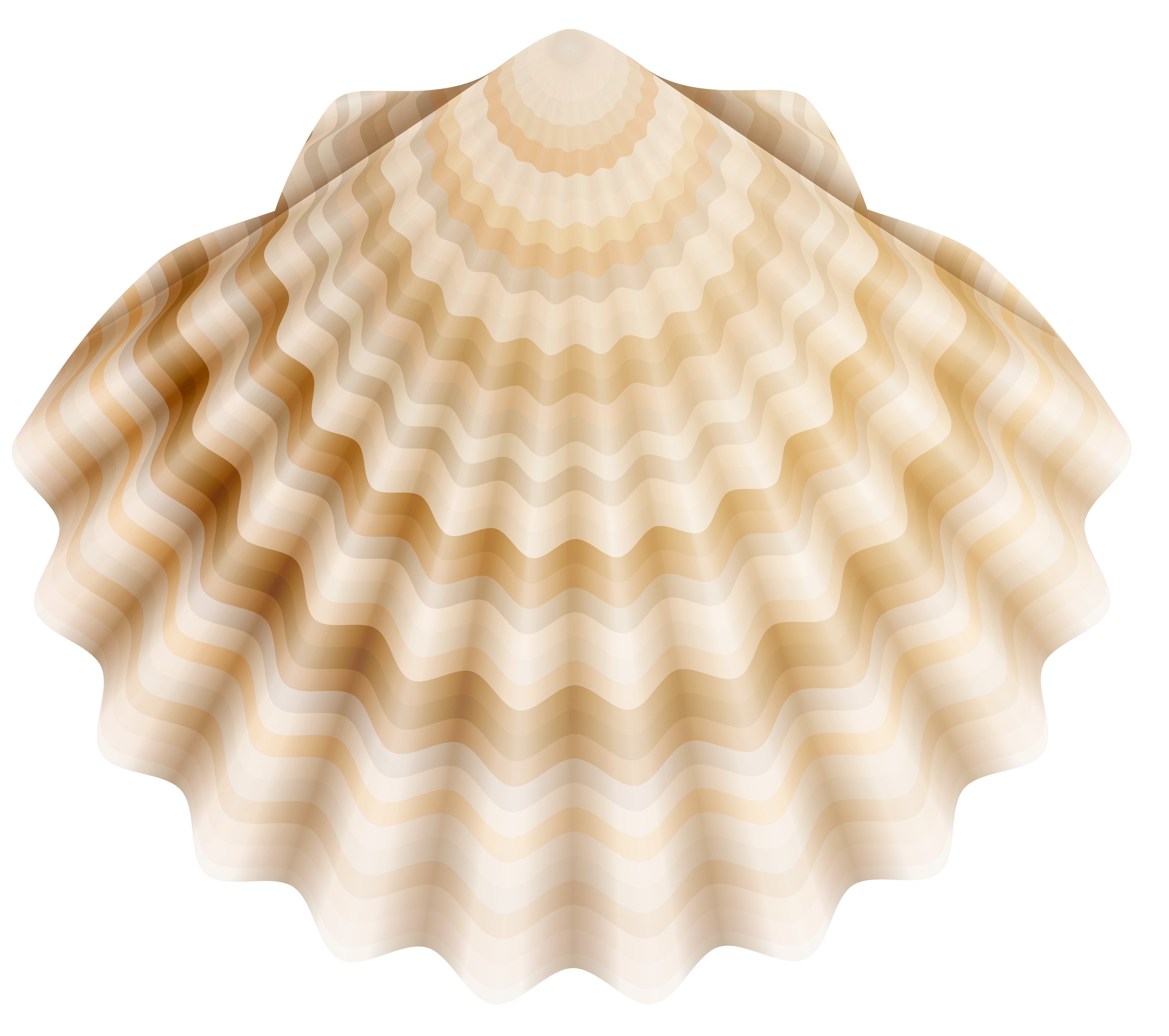 Realistic Shell PNG Clip Art.