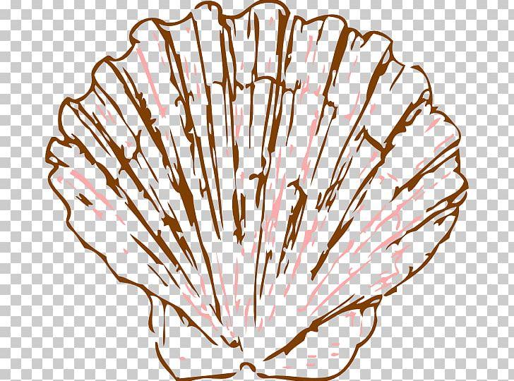 Seashell Pectinidae Drawing Mollusc Shell PNG, Clipart.