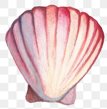 Shell Png, Vector, PSD, and Clipart With Transparent.