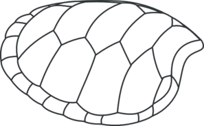 Turtle Shell Outline Clip Art at Clker.com.