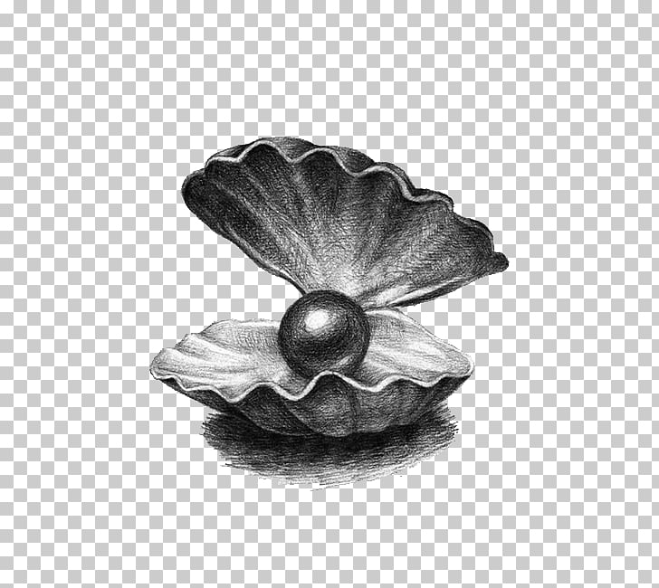 Pearl Drawing Illustration, Pearl shell, gray clam shell.