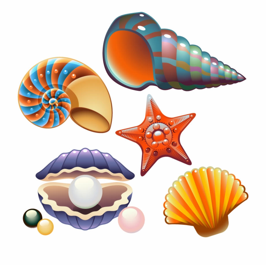 Clam Seashell Nautilidae Clip Art.
