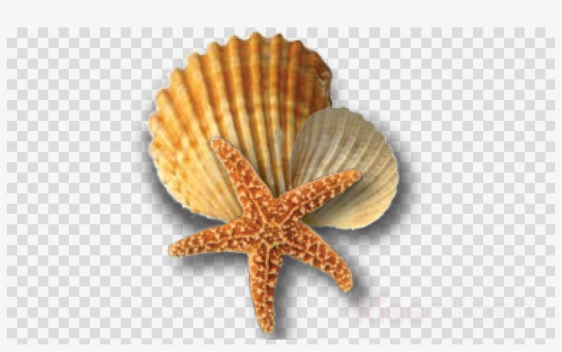 Sea Shells Png Clipart Starfish Seashell Oyster.