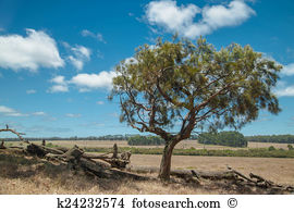 Sheoak Stock Photo Images. 11 sheoak royalty free images and.