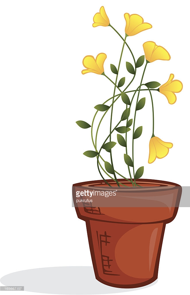 Botanical Hobby Shepherds Purse Potted Plant Vector Art.