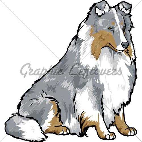 Shetland Sheepdog · GL Stock Images.