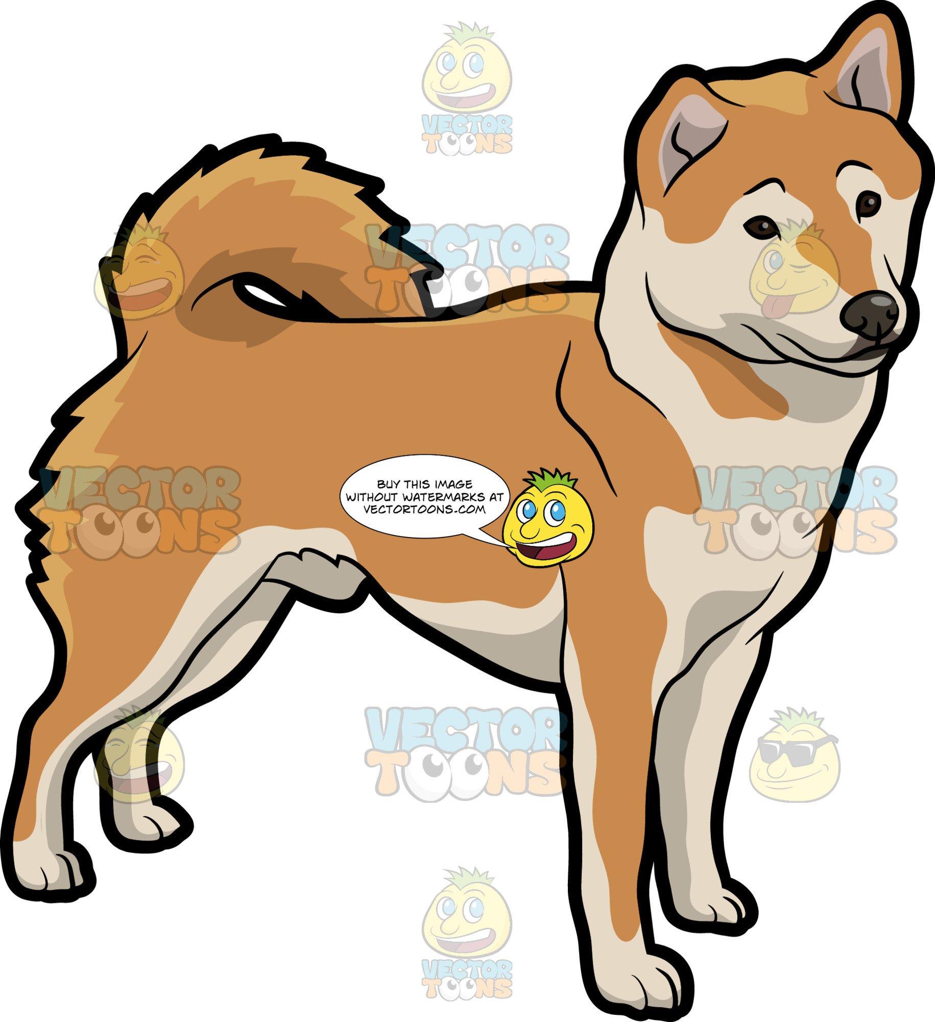 An Observant Shiba Inu Dog.