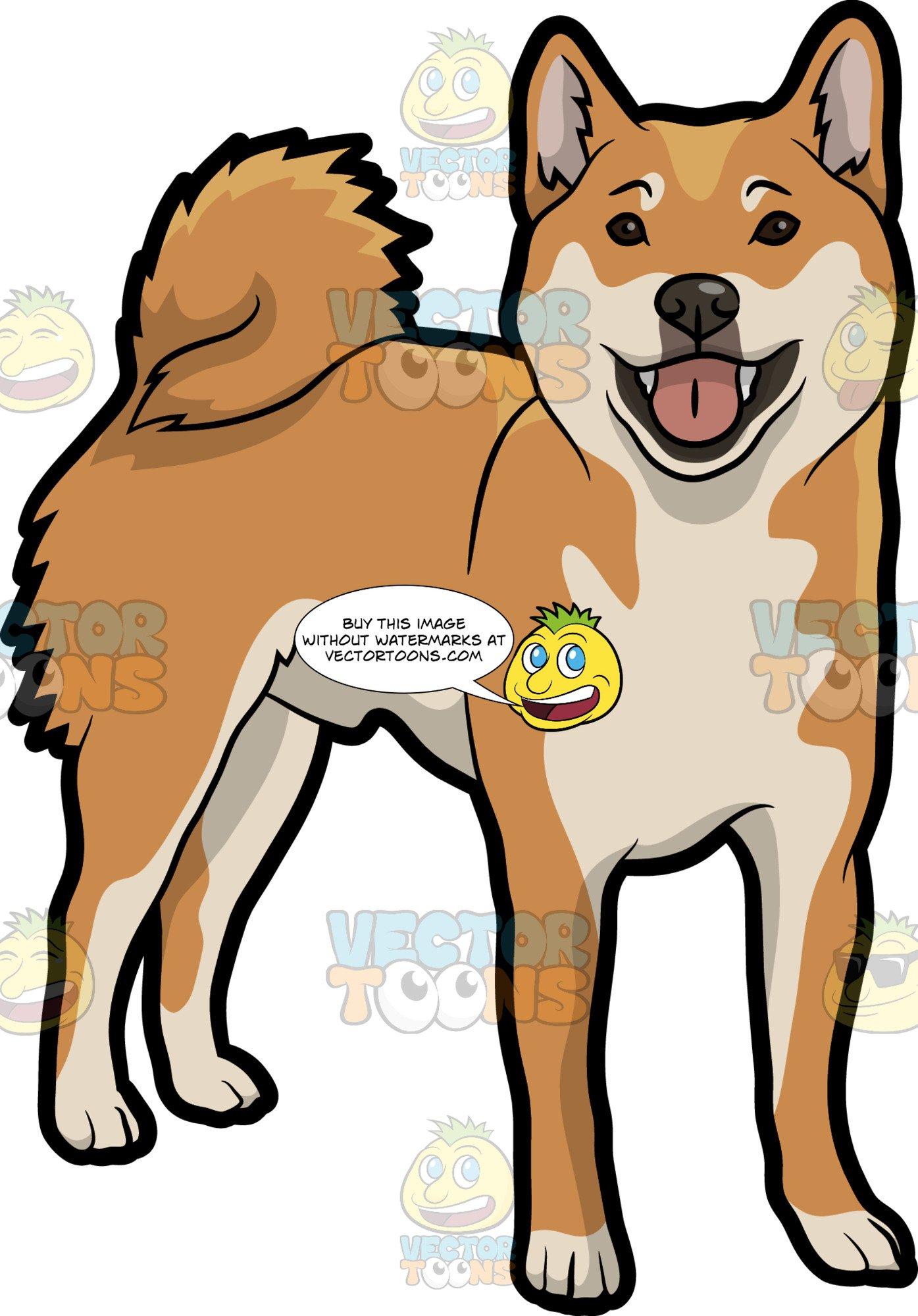 An Alerted Shiba Inu Dog.