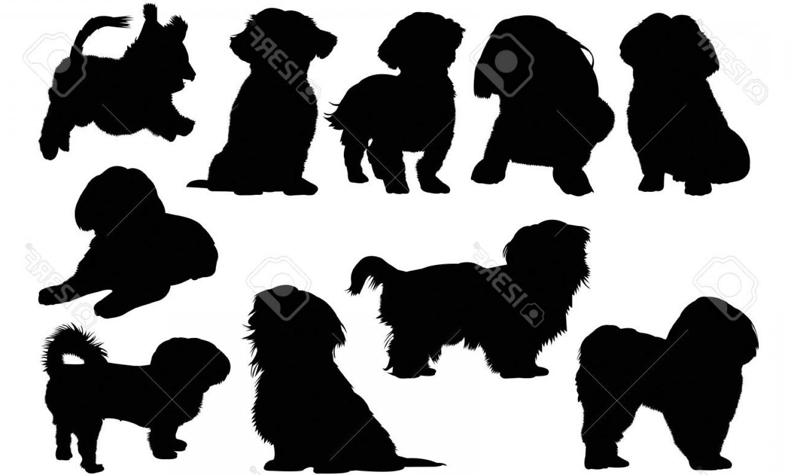 Photostock Vector Shih Tzu Dog Silhouette Illustration.