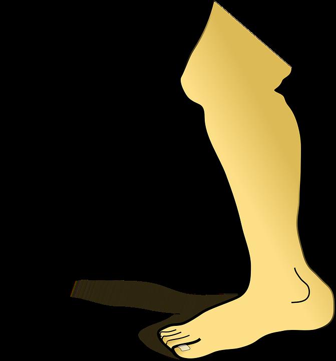 Free vector graphic: Leg, Shin, Foot, Knee, Toes, Limb.