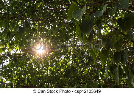 Stock Photo of sun sparkling shine through tree leaf.