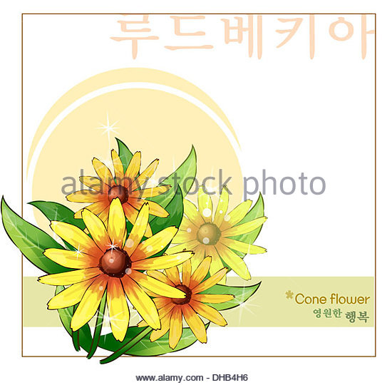 Shining Coneflower Cut Out Stock Images & Pictures.