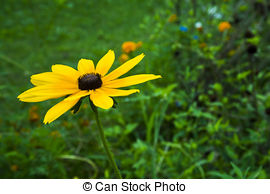 Coneflower Stock Photos and Images. 1,634 Coneflower pictures and.