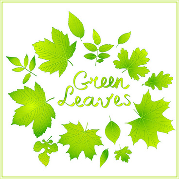 Green leaves graphic art background shiny vector Free vector in.