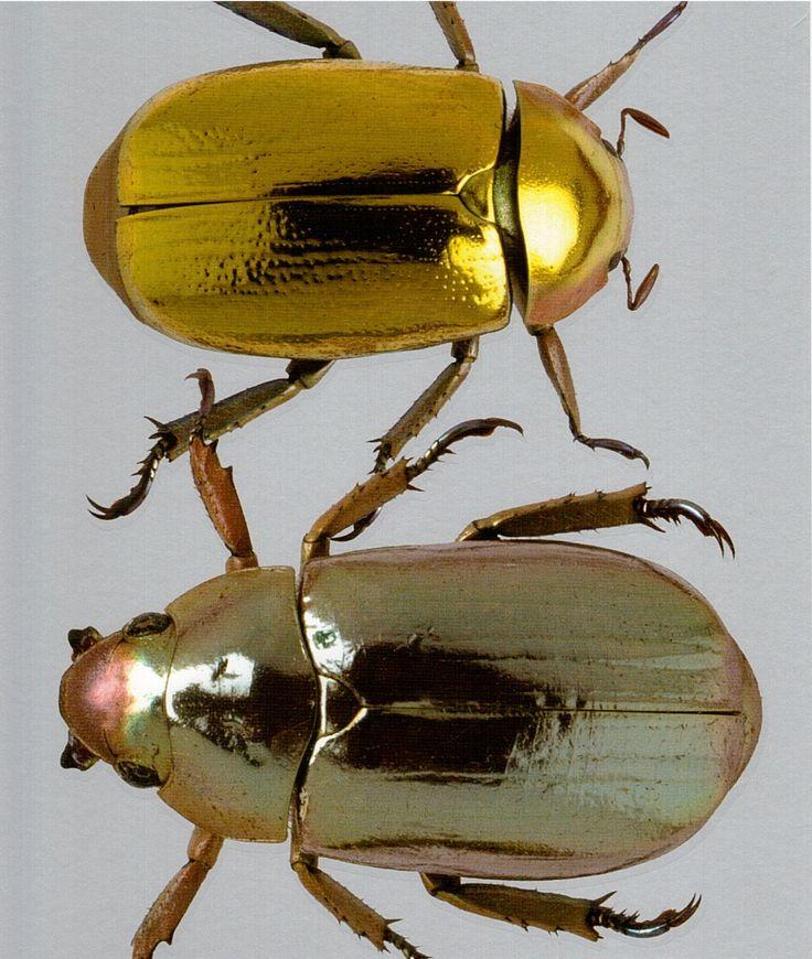 1000+ ideas about Bugs on Pinterest.