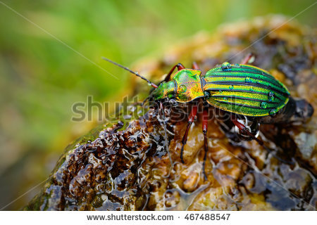 Water Beetle Stock Photos, Royalty.