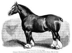 Shire Horse Mare Foal.