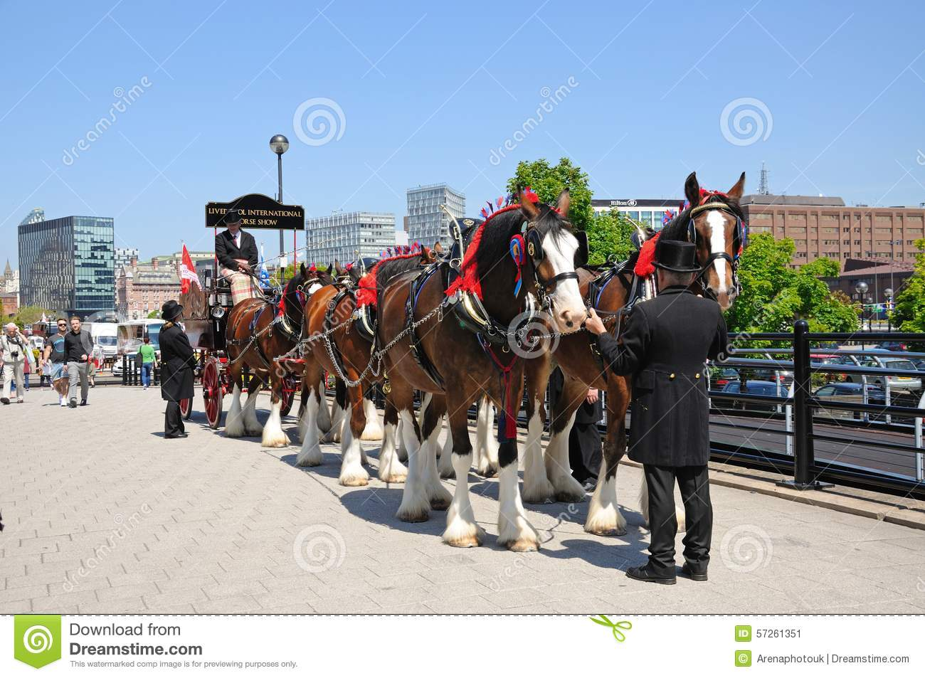 Shire Horses And Carriage, Liverpool. Editorial Photo.
