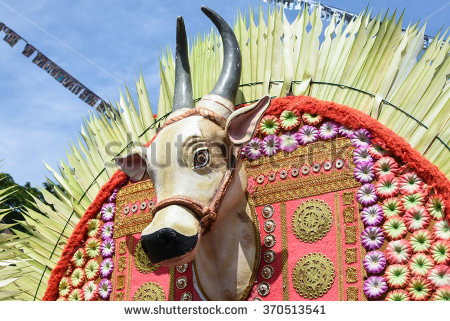 Cow hindu Stock Photos, Images, & Pictures.