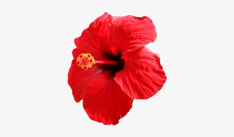 Red Flower Clipart Jaba.