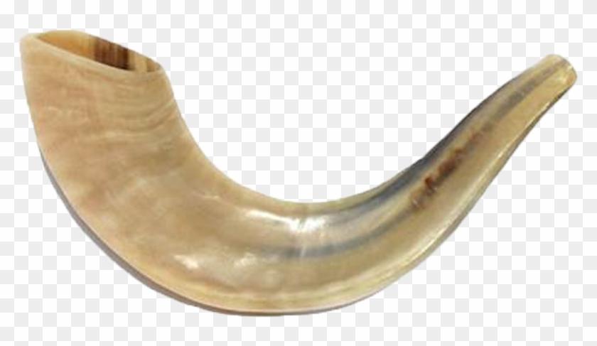 Rams Horn Shofar.