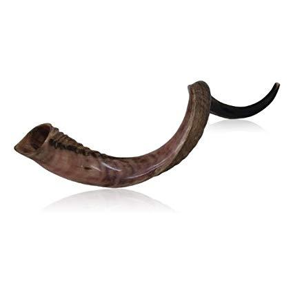 Extra Large Half Polished Half Natural Kudu Horn Shofar.