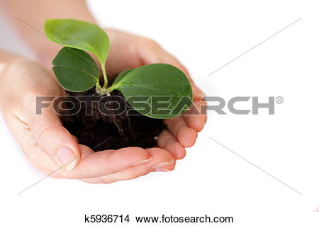 Stock Photo of Isolated shot of a fresh shoot, growing from a.