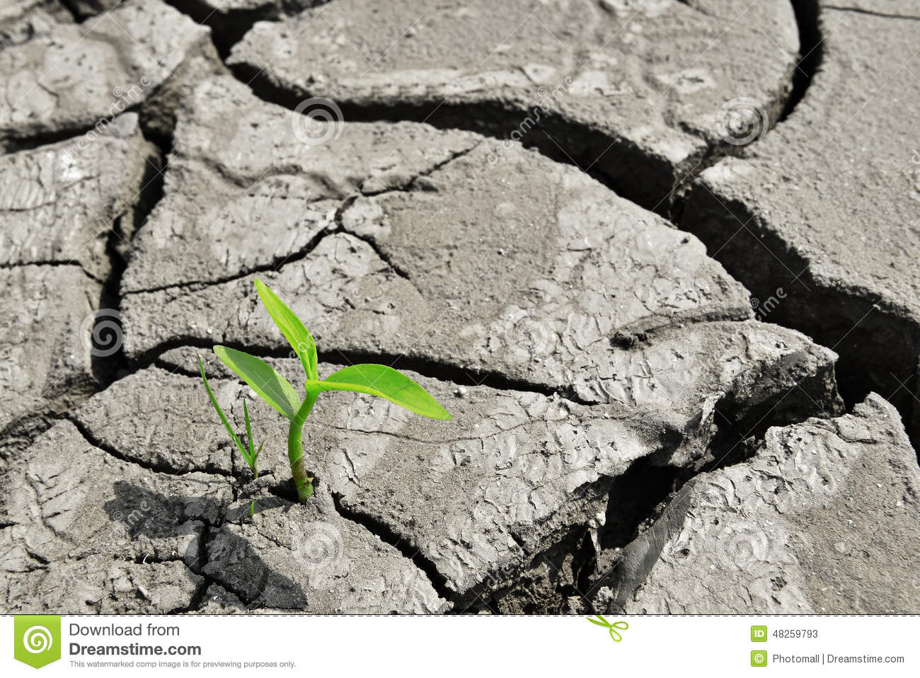 Grow Up,growth,Dry Cracked Land Green Shoot,new Life,new Hope,heal.