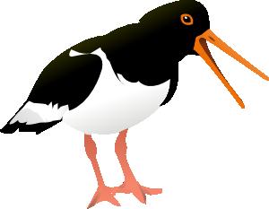Oyster Catcher Bird Clip Art at Clker.com.