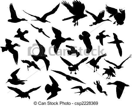 Shorebird Stock Illustration Images. 182 Shorebird illustrations.