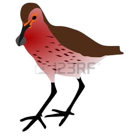52 Shorebird Cliparts, Stock Vector And Royalty Free Shorebird.