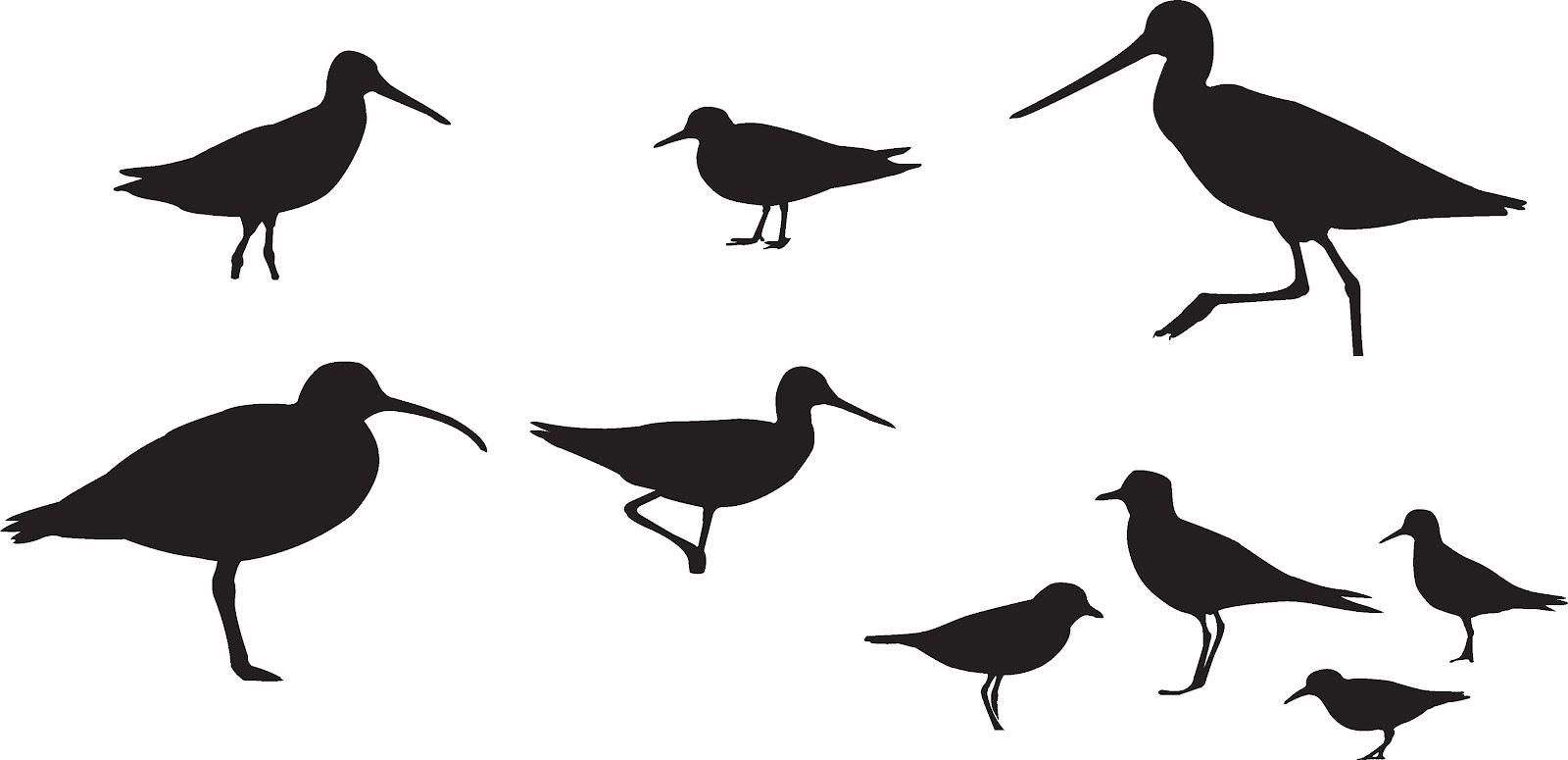 Showing post & media for Shorebird cartoon.