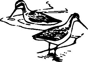 Shorebird Clip Art Download.
