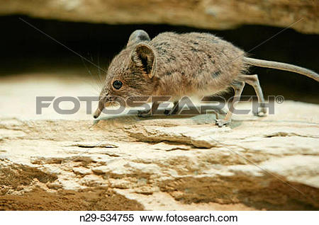 Stock Image of Short.