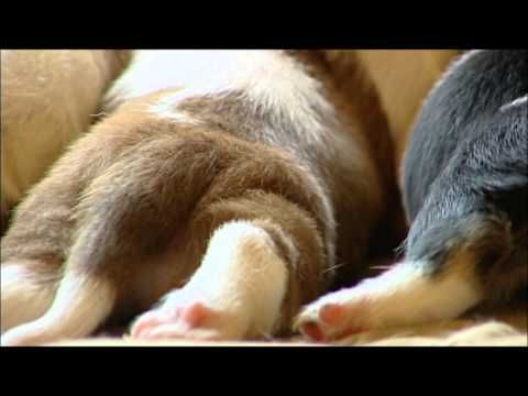 1000+ images about Basset Hounds on Pinterest.