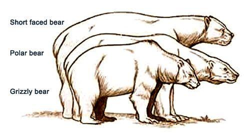 Comparison of giant short.