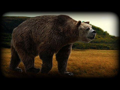 Short Faced Bear.
