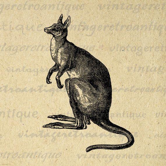 1000+ ideas about Australia Animals on Pinterest.