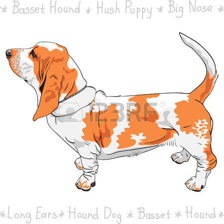 485 Short Tail Stock Illustrations, Cliparts And Royalty Free.