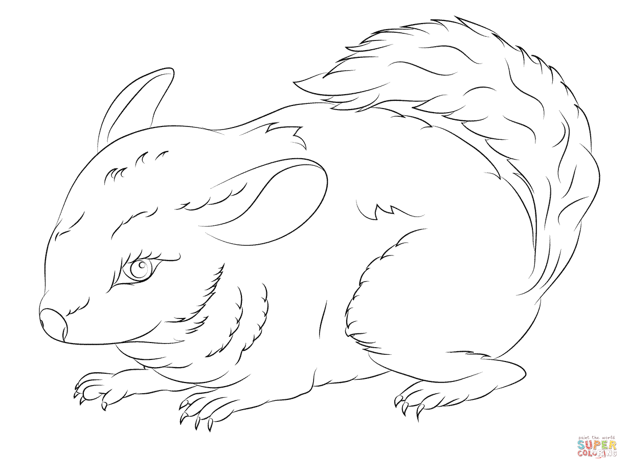 Cute Long Tailed Chinchilla coloring page.