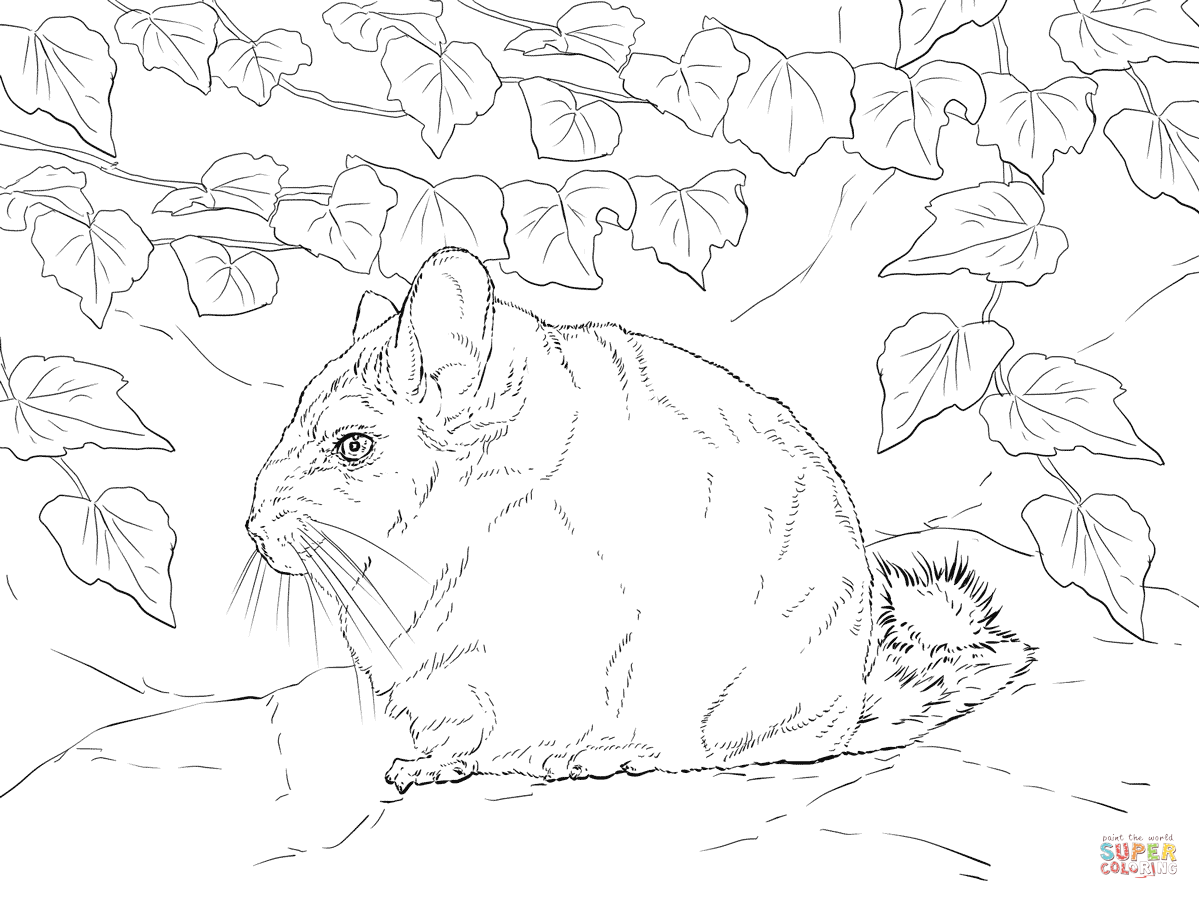 Short Tailed Chinchilla coloring page.