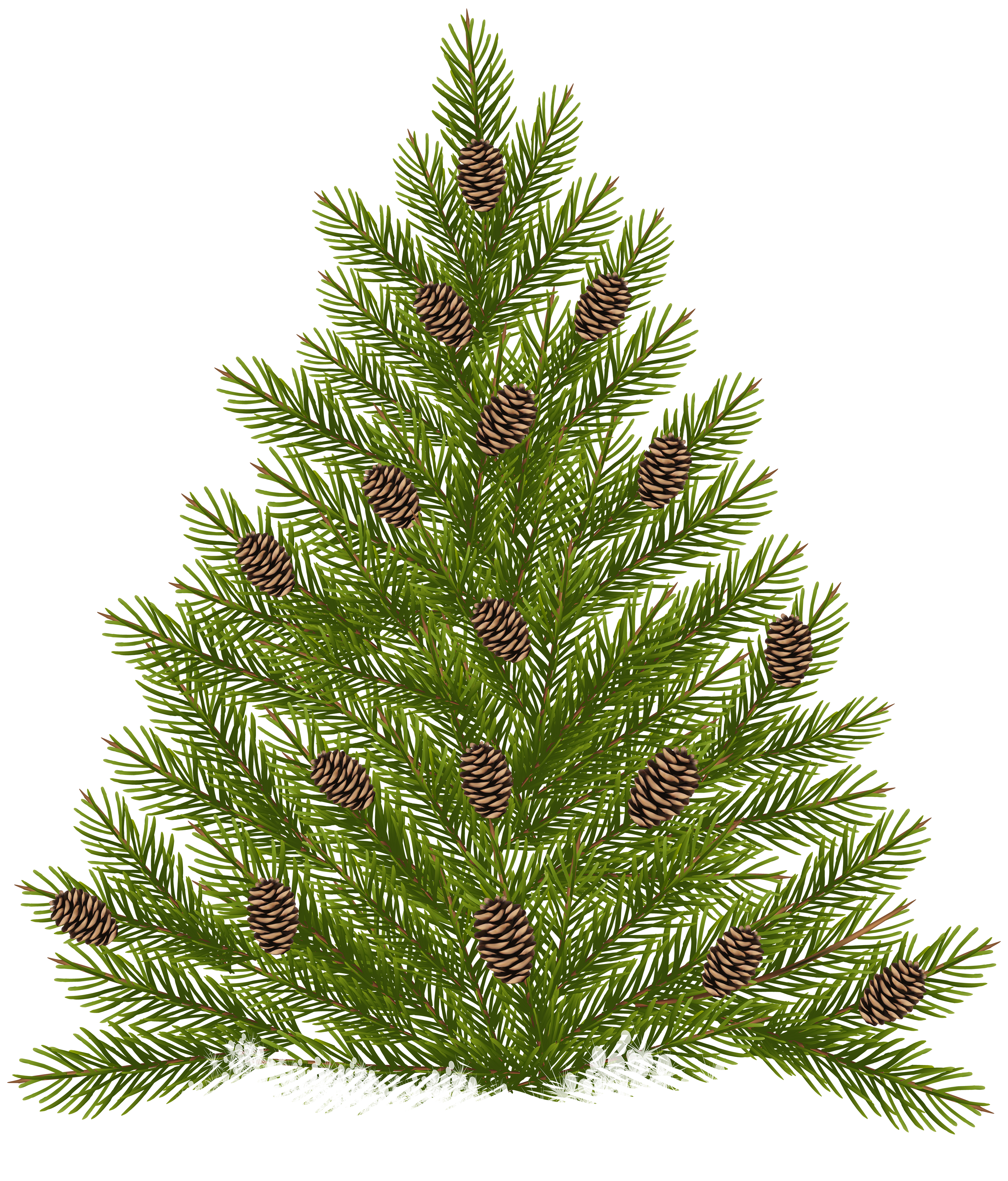 Pine Tree with Cones Transparent PNG Clip Art.