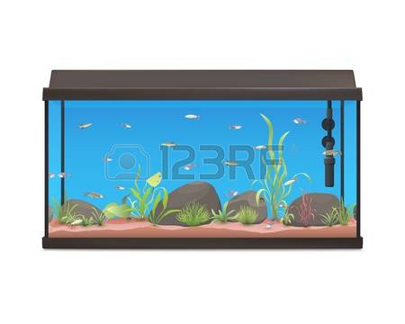 32,724 Aquarium Stock Vector Illustration And Royalty Free.