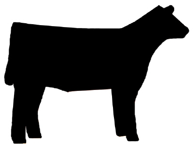 Show Steers Clipart.
