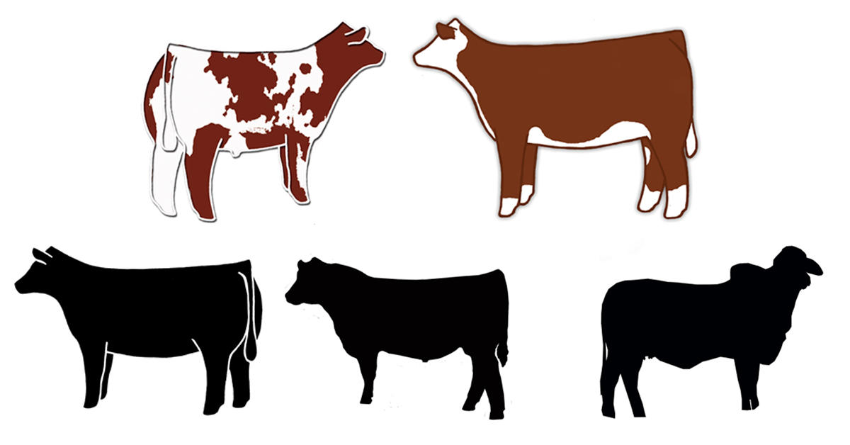 The best free Heifer clipart images. Download from 10 free.