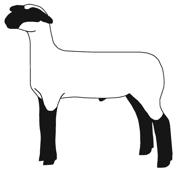 2087 Lamb free clipart.