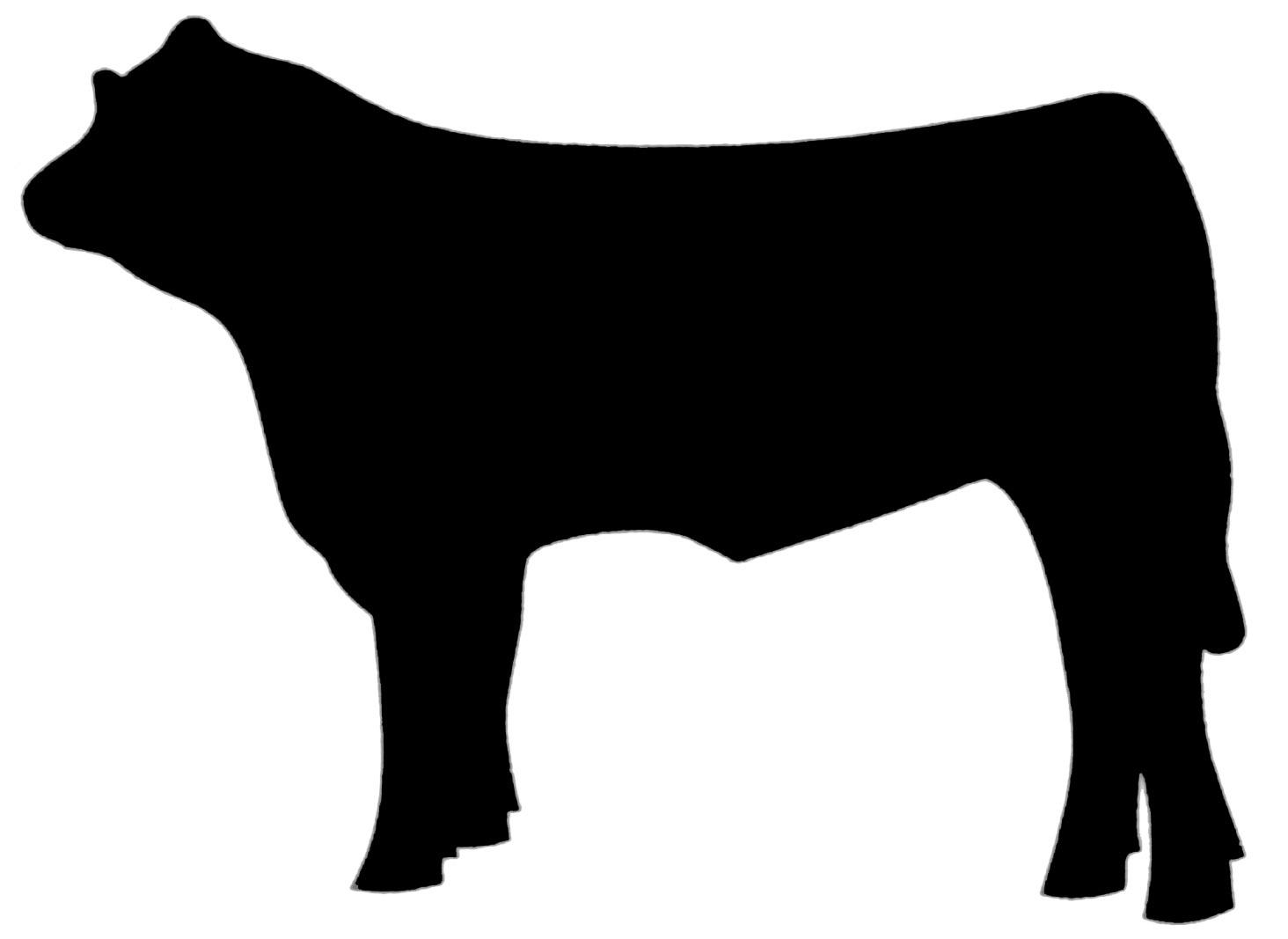 Show Steer Clipart.