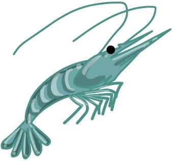Free Shrimp Clipart Pictures.