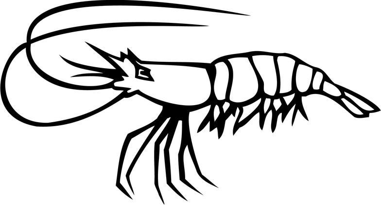 Shrimp clipart black and white » Clipart Station.