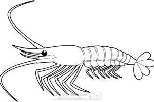 Shrimp black and white clipart 4 » Clipart Portal.